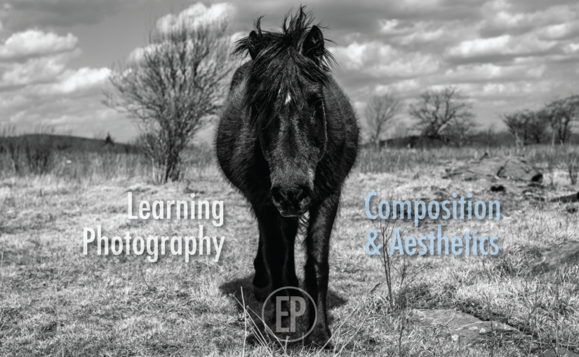 Teaching Fall Photography Classes Online