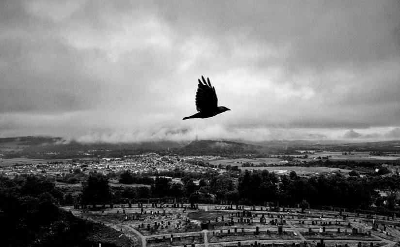 Beerlander 2021 04 – The Ravens Commute At Sunrise